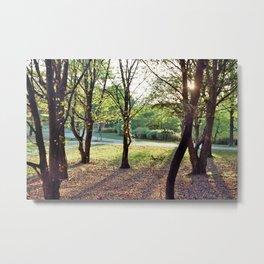 Trees Metal Print