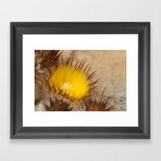 Desert Flower 159 Framed Art Print