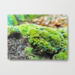 Lichen Up Metal Print