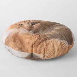 Purebred red Maine Coon cat lying on the floor at home Floor Pillow