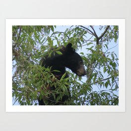Bearly-Contained Excitement Art Print