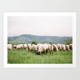 Bulgarian Sheep Art Print