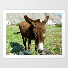Donkey in Santorini Art Print