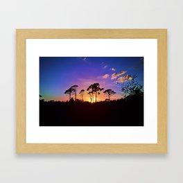 Bird Rookery Wink Framed Art Print