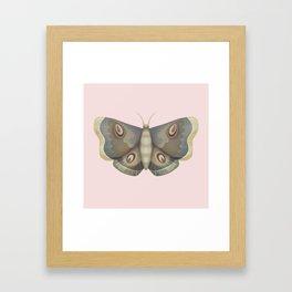 papillon de nuit Framed Art Print