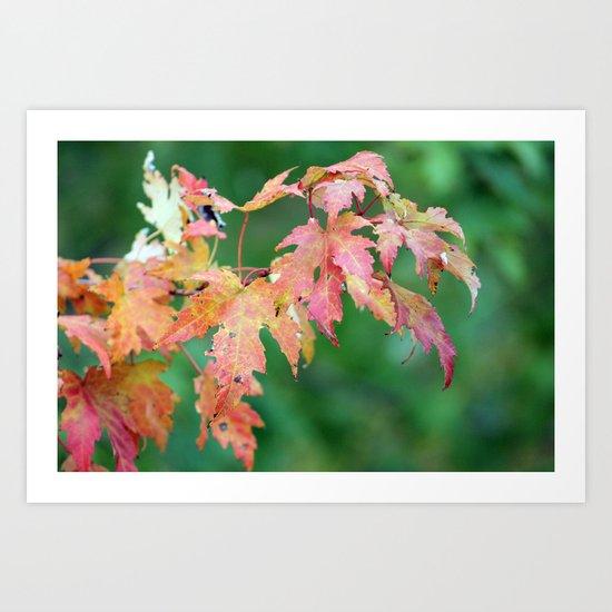Fall Beauty Art Print