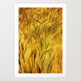 Wild Grass Burnished By The Sun Art Print