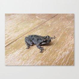 Tiny Toad 0833 Canvas Print
