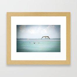 Pelicans in Flight Framed Art Print