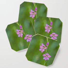 Beauty in nature, wildflower Gladiolus illyricus Coaster