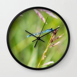 Damselfly's Dinner Wall Clock