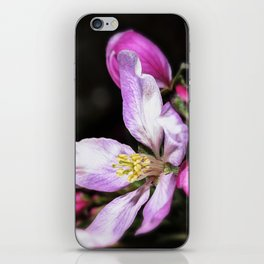 Close up of a Crab apple blossom iPhone Skin