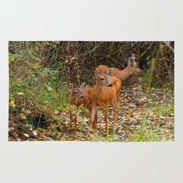 A Trio of Blacktail Deer in the Forest Rug