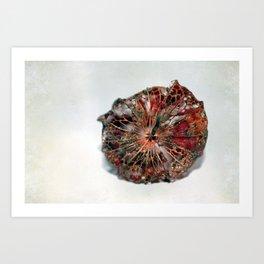 Physalis Part VII. Art Print