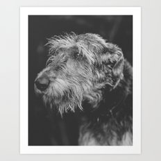 The Irish Wolfhound Art Print