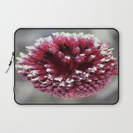 Macro of Round-Headed Leek Flower Allium Sphaerocephalon Laptop Sleeve