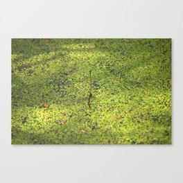 On the surface Canvas Print