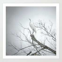 Egret, 2011.  Schriever, LA Art Print
