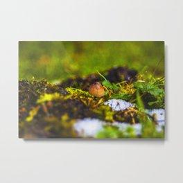 Small Mushroom Metal Print