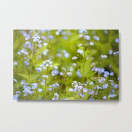 Forget-me-not Metal Print