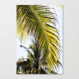 Pretty Palm Canvas Print