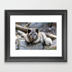 Vulpes Lagopus Framed Art Print
