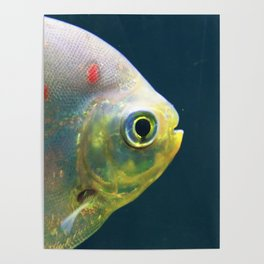One Fish Poster