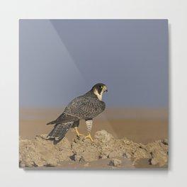 Falcon Scape Metal Print