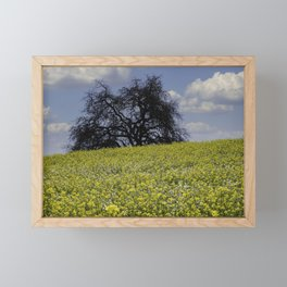 Mustard Seed Flower Fields, Fields of Flowers in Sonoma County, California Photography, Landscape, Spring Photography Framed Mini Art Print