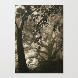Corstorphine Hill. After the Bend. Mist. Canvas Print