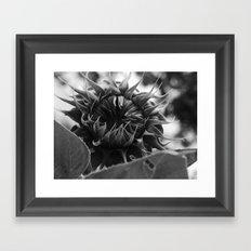 monstrous sunflower Framed Art Print