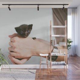 Cat by Manki Kim Wall Mural