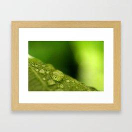 Green Leaf with Rain Drops Macro Photography Framed Art Print