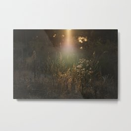 Crave The Light Metal Print