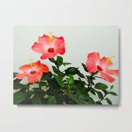 Pink Hibiscus Trio WC Metal Print
