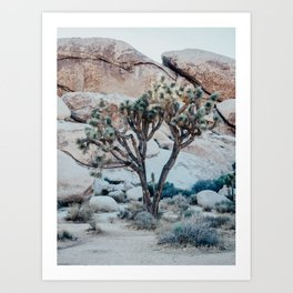 Lonely Tree Joshua Tree California Art Print