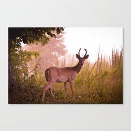 Good Morning Deer Canvas Print