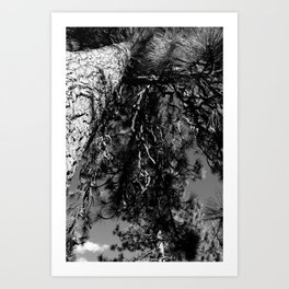 Up The Tree Art Print