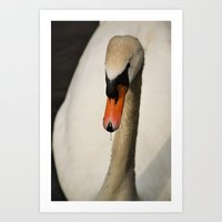 swan Art Prints featuring Swan by Lorenzo Bini