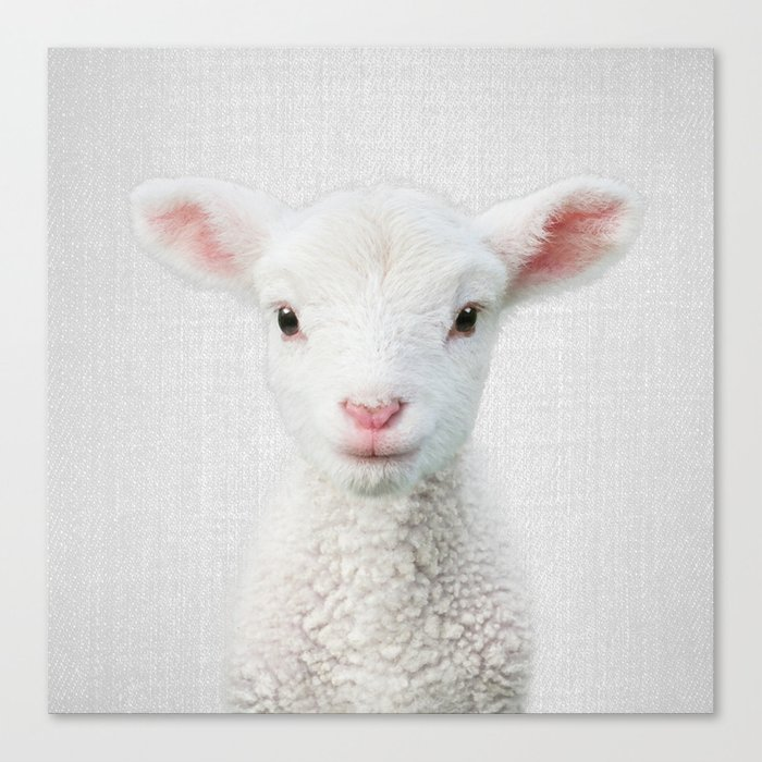 Lamb - Colorful Canvas Print