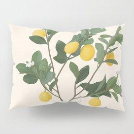 Lemon Branches II Pillow Sham