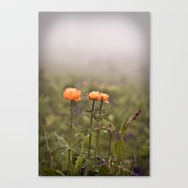 mountain flowers in a fog Canvas Print