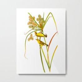 Prairie Warbler Bird Metal Print