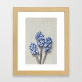 Light Blue Hyacinths Framed Art Print