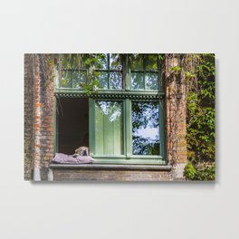 A dog at the window (Bruges' Most Famous Citizen) Metal Print