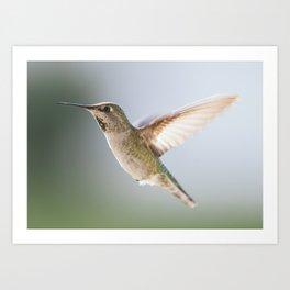 Perfect Posed Hummingbird Art Print
