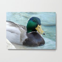 Mallard on my Mind Metal Print