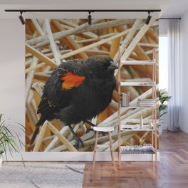 Juvenile Male Redwing Blackbird Wall Mural