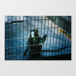 If Only Canvas Print