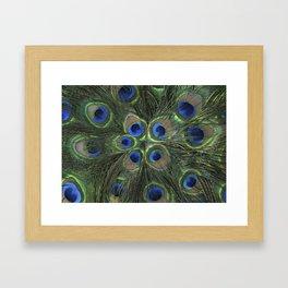 Peacock Flower Framed Art Print